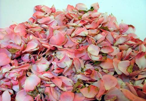 RosePetals500