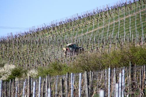 VineyardsOchsy