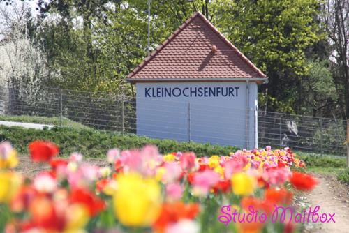 KleinOchsy